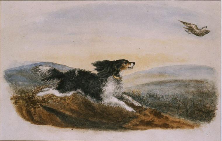 Flossy par Emily Brontë, c.1843